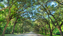 Wormsloe Plantation Savannah O...