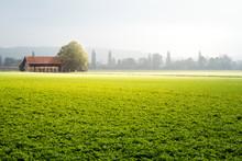 Agrarland Mit Bauernhof, Wiese...