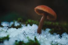 Mushroom In Ice