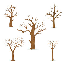 Set Of Bare, Leafless Trees With Empty Branches Isolated On A White Background. Vector Winter, Autumn Icon.