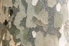 Tree Bark Resembling A Camoufl...