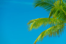Palm Tree Branches. Blue Sky On Background. Beautiful Sunny Day. Spring Or Summer Vacation.