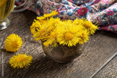 Fototapeta Fresh coltsfoot or Tussilago farfara flowers on a table