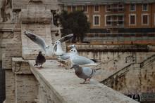 Birds Sit On A Bridge Over The...