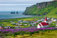 View Of Basalt Stacks Reynisdrangar, Black Sand Beach Near Vik And Violet Lupine Flowers And Lonely Church, South Iceland, Summer Time