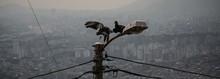 Cuervos En La Ciudad