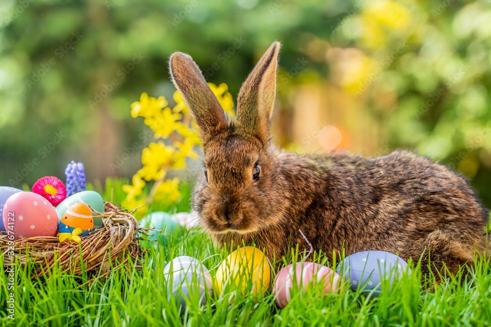 Fototapeta easter bunny and eggs
