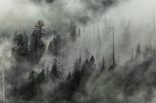 Cuadros en Lienzo Yosemite trees with clouds moving past them