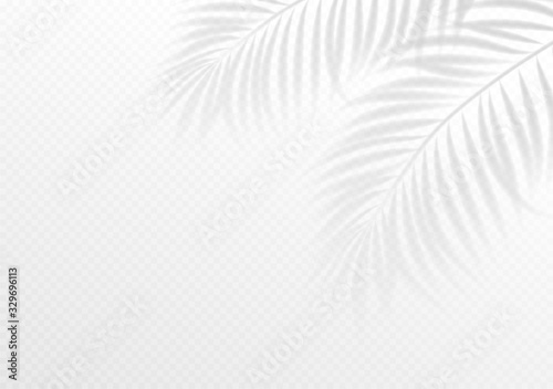 Obraz The transparent shadow overlay effect. Tropic leaf. Mockup with overlay a palm leaf shadow. Vector illustration - fototapety do salonu