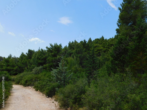 Photo Pine tree forest on mount Parnitha, in Attica, Greece