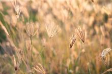 Closeup Swollen Finger Grass (...