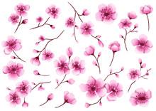 Hand Drawn Isolated Cherry Blo...