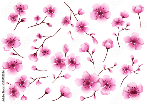 Fototapeta Hand drawn isolated cherry blossom illustration clipart. Sakura flowers illustration set. Sakura blossom branches. Botanical flowerscape illustration set.  obraz