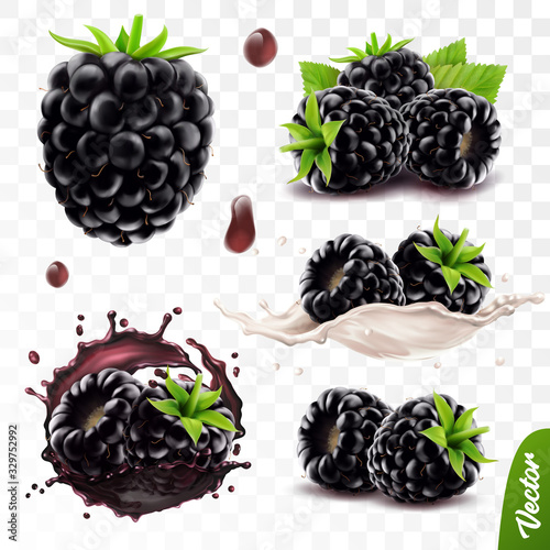 Photo 3d realistic transparent isolated vector set, whole and slice of blackberry, bla