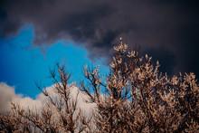 Spring Thunderstorm. A Branch ...