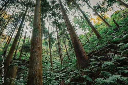 シダの葉が生い茂る森の中と樹木 Canvas-taulu