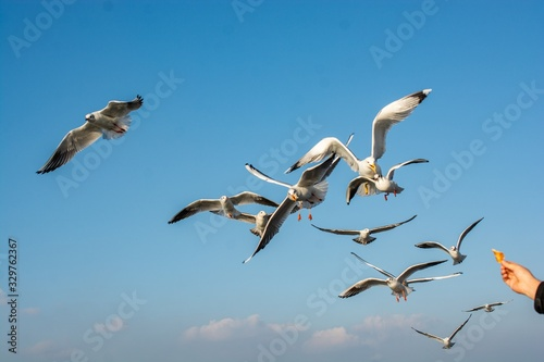Vászonkép Stunning shot of a flock of birds flying and migrating on a bright blue sky