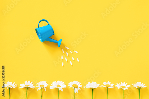 Watering white chamomiles from small blue watering can on yellow background Fototapeta