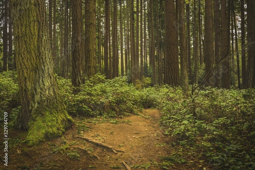 Natural lighting in a wooded area