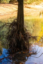 Beautiful Shot Of A Tree On A Lake With Its Roots Above The Water On A Sunny Day