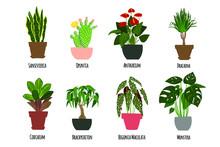 Houseplants. Tropical Plants In Pots. Exotic Flowers. Sansevieria, Opuntia, Anthurium, Dracaena, Codiaeum, Brachychiton, Begonia Maculata, Monstera