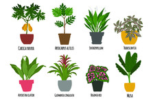 Houseplants. Tropical Plants I...