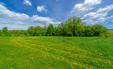 Spring Photography, An Old Rav...