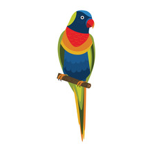 Rainbow Lorikeet Exotic Parrot In Flat Design