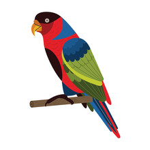 Western Black Capped Lory Parrot In Flat