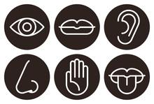 Sensory Organs Icon Set