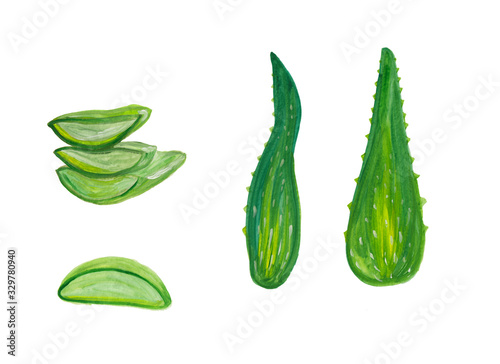 Aloe vera cute pieces and leaves Wallpaper Mural