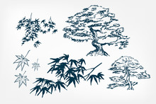 Maple Tree Leaves Branches Ske...