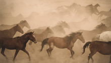 Horses Running And Kicking Up ...