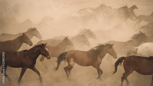 Fototapeta Horses running and kicking up dust