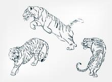 Japanese Chinese Vector Design Set Tiger Sketch