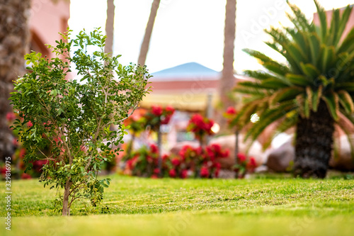 Small green palm tree surrounded with bright blooming flowers growing on grass covered lawn in tropic yard Canvas Print