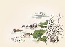 Pond Ducks Burdock Nature Land...