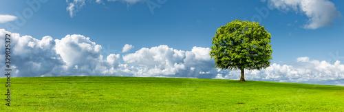 Obraz Baum auf einer Grünen Wiese - fototapety do salonu