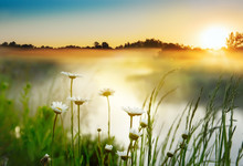 Daisy Flowers By The River On An Early Foggy Morning At Dawn. Beautiful Morning On A Wild River In Spring Or Summer.