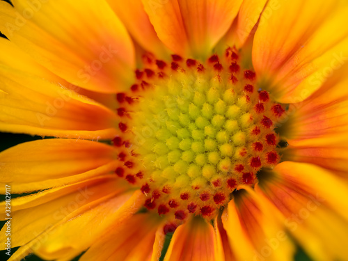 Photo Close-up view of a yellow and orange Gazania flower