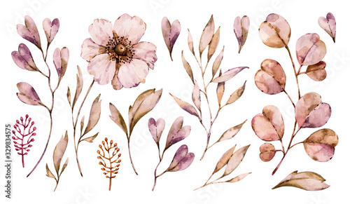 flowers-anemone-and-leaves-handpainted-set-isolated-on-white-background-vector-floral-watercolor-boho-hand-painted-illustrations-collection