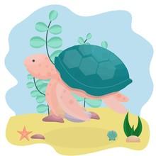 Sea Turtle, Underwater, Aquari...