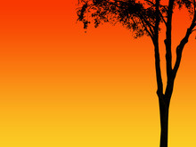 Silhoeutte Of Tree Against Red And Orange Sky