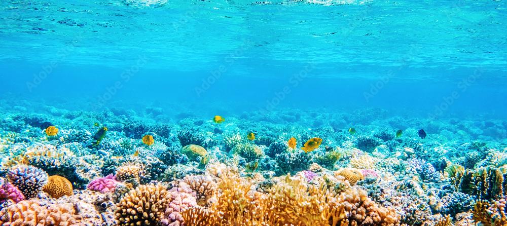 Fototapeta Beautifiul underwater panoramic view with tropical fish and coral reefs