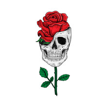Tattoo And T Shirt Design Skull And Rose Hand Drawn Premium Vector