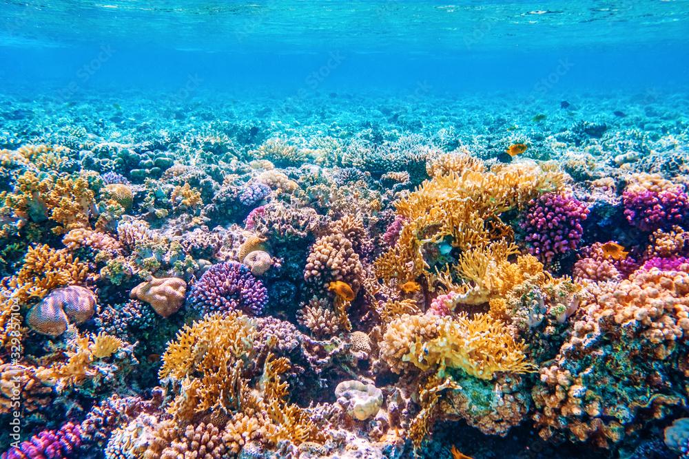 Fototapeta Beautifiul underwater world with tropical fish and coral reefs
