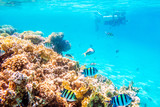 Coral reefs and fish, underwater world