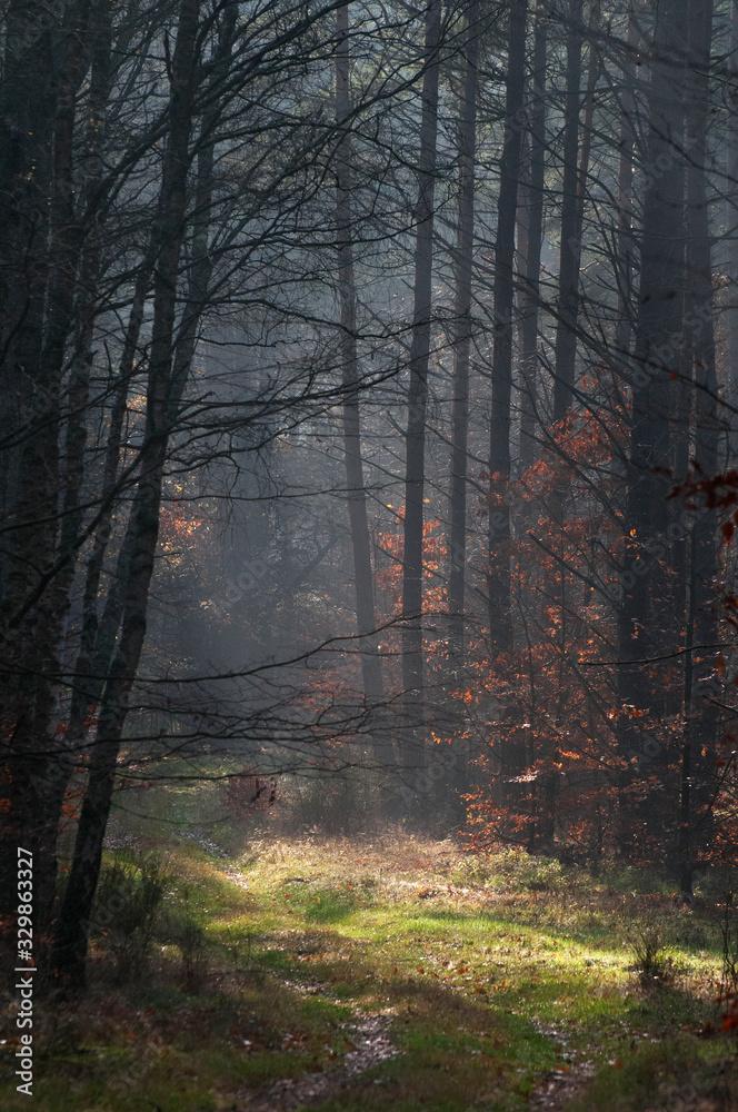 Fototapeta jesien