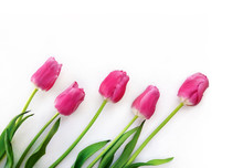 Frame Of Tulips, Five Flowers ...