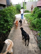 High Angle View Of Woman With Dogs On Footpath Amidst Plants